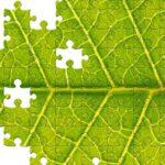 Qu'est-ce que le marketing durable et pourquoi est-il si important ?